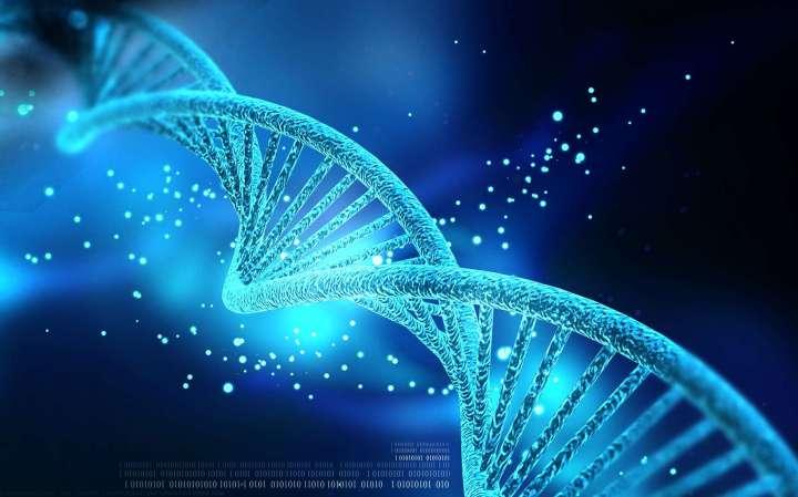 ADN: comment l'expression génique intervient dans le massage