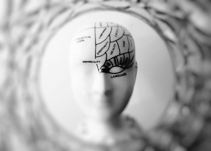 cerveau comme organe sexuel