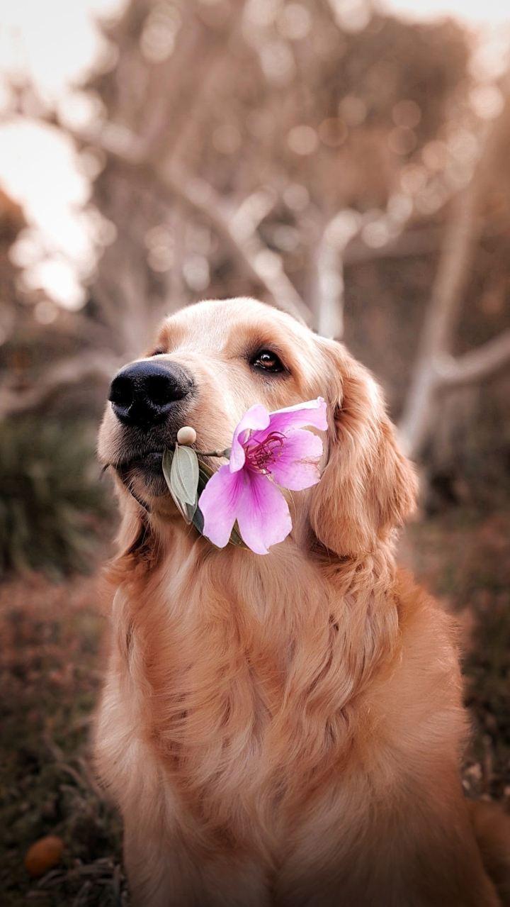10 astuces pour booster sex appeal devenir sexy avoir un chien