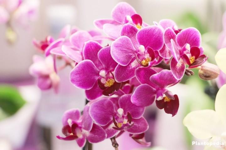 dire je t'aime en langage des fleurs - orchidée - j'ai envie de toi