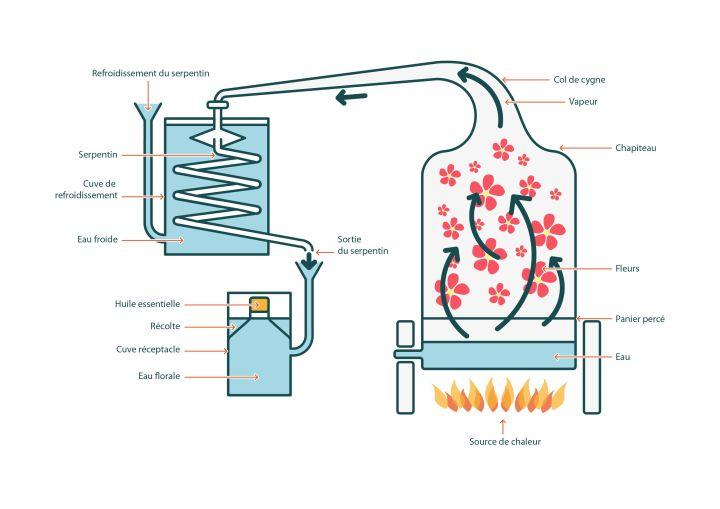 comment sont faites les huiles essentielles - distillation à la vapeur d'eau